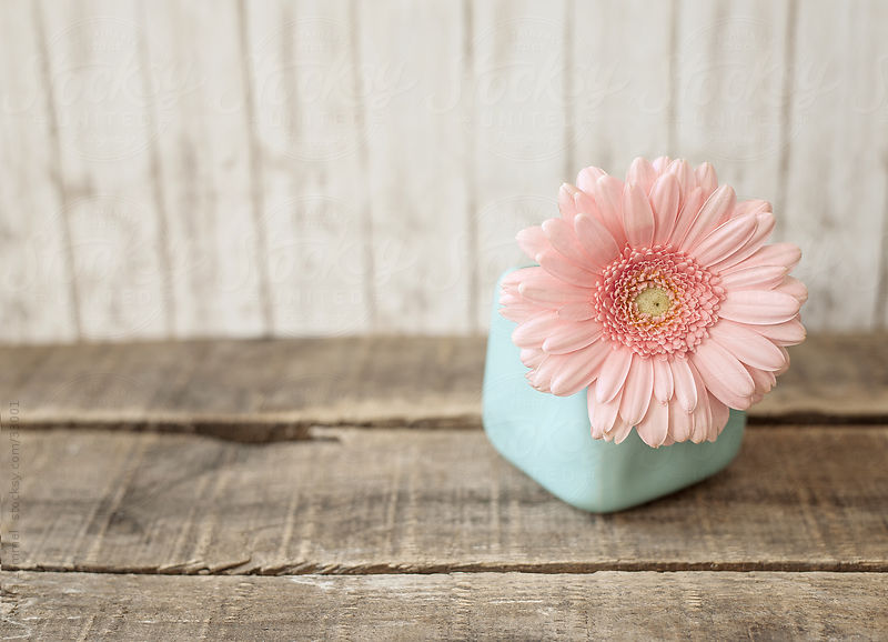 A Pastel Pink Flower In A Pale Blue Vase On A Weathered Wooden Board